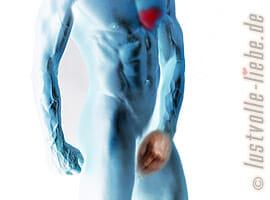 Erektionsstörungen als Vorbote des Herzinfarkts