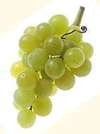 spriziger Weißwein aus fruchtigen Trauben