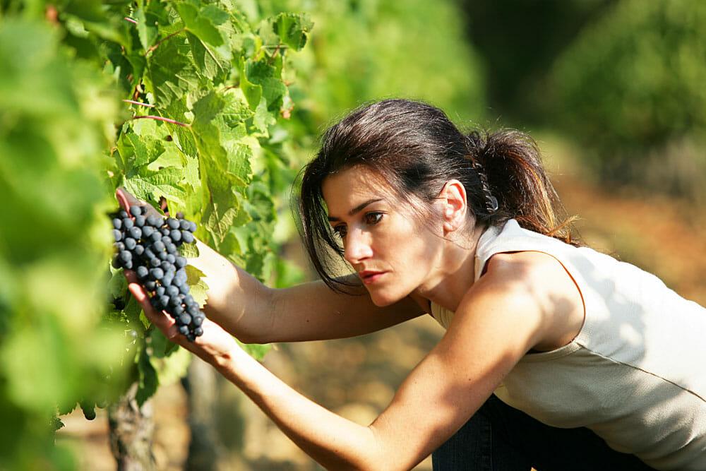 Weintrauben - gesunder Genuss, sexy Frucht!